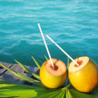 Coconuts cocktail palm tree leaf in Caribbean — Stock Photo #5392175