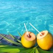 Coconuts cocktail palm tree leaf in Caribbean — Stock Photo #5392181