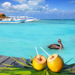 Caribbean fresh coconuts cocktail pelican swimming — Stok fotoğraf