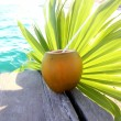 Coconuts cocktail palm tree leaf in Caribbean — Stock Photo #5392253