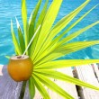 Coconuts cocktail palm tree leaf in Caribbean — Stock Photo #5392256