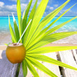 Coconut fresh in caribbean sea pier chit palm leaf — Stock Photo