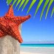 Caribbean starfish on wood pole beach — Stock Photo