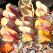 Seashells shark jaws clams Caribbean sea souvenirs — Stock fotografie