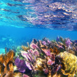 Caribbena coral reef Mayan riviera colorful - Stock Photo