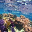 Caribbena coral reef Mayan riviera colorful — Stock Photo