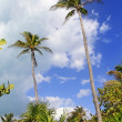 Coconut palm trees tropical typical background - Stock Photo