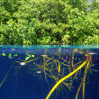 Mangrove up down waterline real ecosystem — Stock Photo