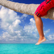 Royalty-Free Stock Photo: Caribbean inclined palm tree beach tourist legs