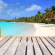 Stock Photo: Contoy Island palm treesl caribbean beach Mexico