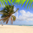Coconut palm trees tropical typical background — Stock Photo