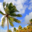 Coconut palm trees tropical typical background — Stock Photo #5399444