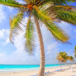 Coconut palm trees tropical typical background — Stock Photo #5399455
