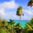 Caribbean beach Tulum Mexico turquoise aqua — Stock Photo #5399528