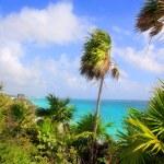 Caribbean beach Tulum Mexico turquoise aqua — Stock Photo
