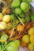 Coconuts fresh crop harvest green and yellow — Stock Photo