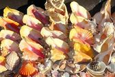 Seashells shark jaws clams Caribbean sea souvenirs — Stock Photo