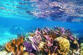 Caribbena coral reef Mayan riviera colorful — Stock Photo
