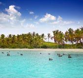 Tropické moře tyrkysové pláže karibiku pelikán — Stock fotografie