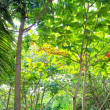 Jungle rainforest atmosphere green background — Stock Photo