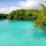 Cenote mangrove turquoise water Mayan Riviera — Stock Photo #5400259