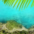 Cenote mangrove turquoise water Mayan Riviera — Stock Photo