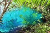 Cenote mangrove turquoise water Mayan Riviera — Stock Photo