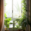 Backlit in a house room with plants — Stock Photo #5496914
