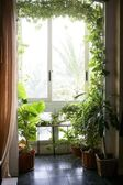 Backlit in a house room with plants — Stock Photo