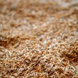 Oat cereal grain texture selective focus — Stock Photo #5500399
