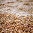 Oat cereal grain texture selective focus — Stock Photo #5500401