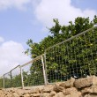 Fence on orange tree made of recycled bed structures — Stock Photo #5500442