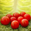 Cherry tomatoes and cabbage leaf — ストック写真
