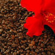 Red hibiscus flower on toasted coffe beans — Stock Photo