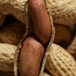 Peanuts macro golden texture background — Stock Photo #5501454