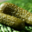 Green pickles macro studio shot, textured skin - Foto Stock
