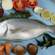 Denton, Mediterranean sparus fish, gilthead, snapper — Stock Photo