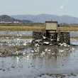 Stock Photo: Rice tractor, wet rice fields and seagulls