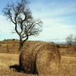 Yellow straw round bale in the fields, Spain — Stock Photo #5501875