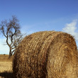 Yellow straw round bale in the fields, Spain — Stock Photo