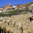 Lamb herd, sheep, gout flock Spanish village — Stock Photo