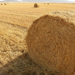 Hay round bale of dried wheat cereal — Stock Photo