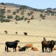 Bull cattle black toro in southern Spain - Stock Photo