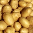 Poratoes many in market stand yellow brown — Stock Photo #5502629