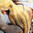 Octopus catch pattern from mediterranean sea - Stock Photo