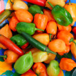 Chili Habanero Serrano hot mexican peppers — Stock Photo #5502843