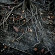 Dark black tree roots over surface, terror - Stock Photo