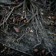 Stock Photo: Dark black tree roots over surface, terror