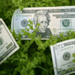 Dollar notes growing from a green plant - Stock Photo