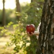 Fantasy girl holding a red apple in the forest — Stock Photo #5503299